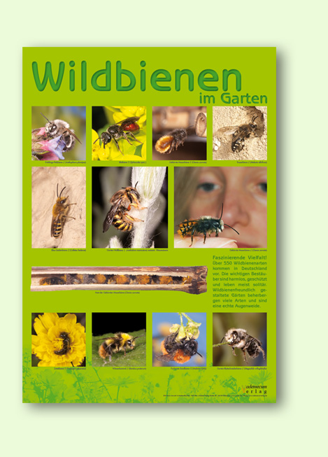 Wildbienenposter